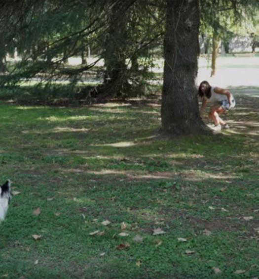 Educare il cane: la ricerca di un oggetto
