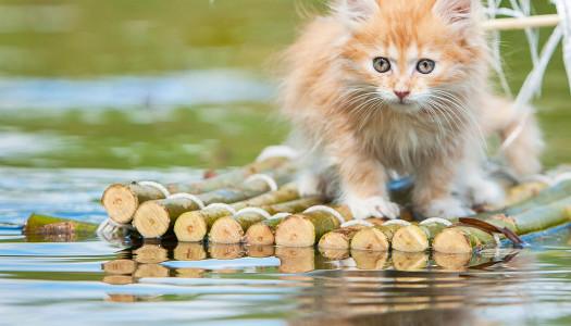 L'acqua piace ai gatti, oppure no?
