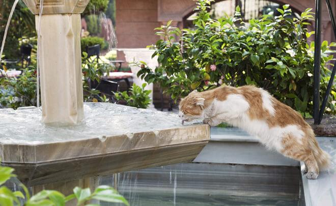 gatto beve dalla fontana