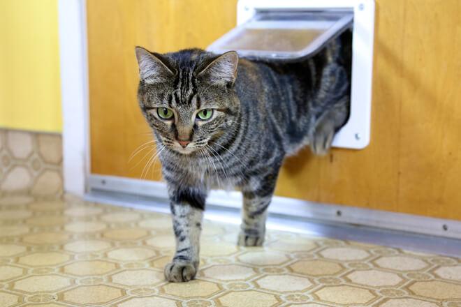gatto che esce dal buco della porta