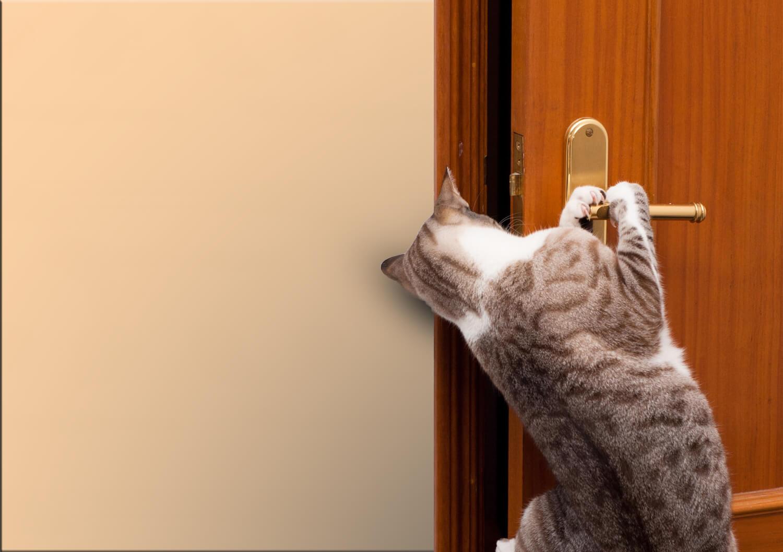 gatto e porte chiuse