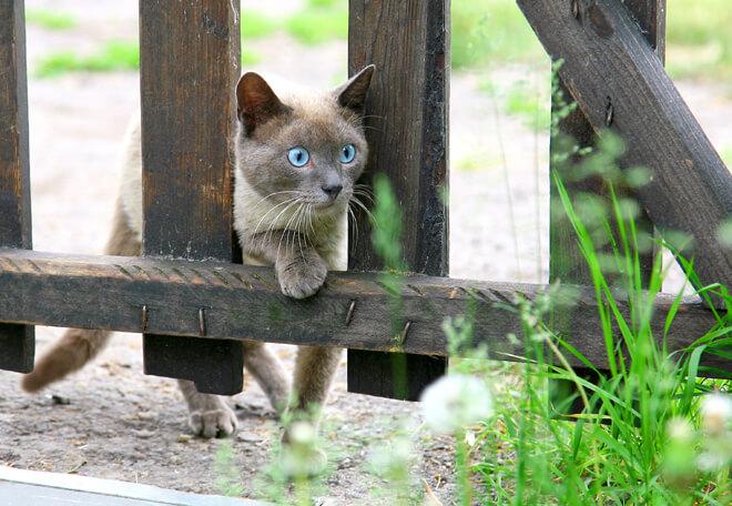 Gatto in giardino recintato
