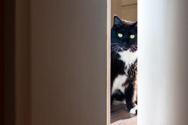 gatto scruta da dietro la porta