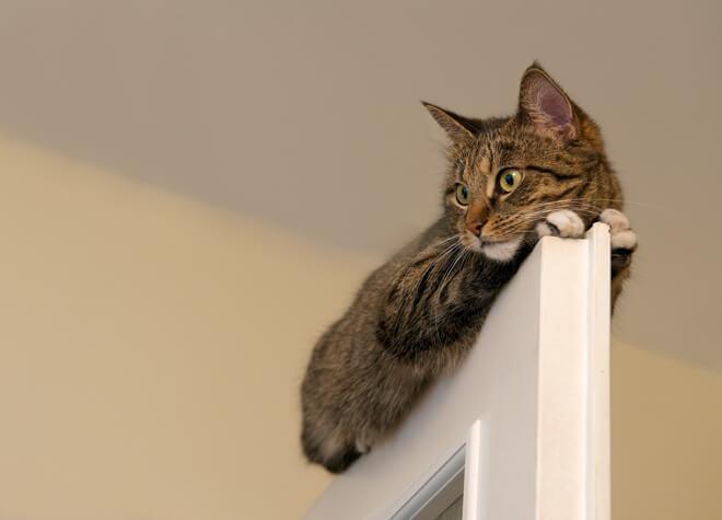 Gatto sopra la porta