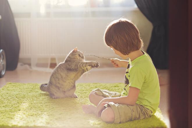 Giocare con il gatto in casa