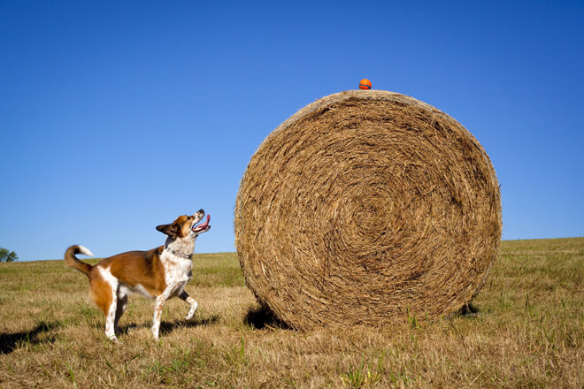 Cane cerca di prendere la pallina