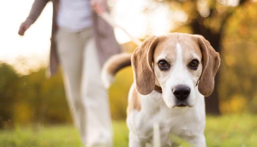 Passeggiare con il cane: un importante momento di condivisione