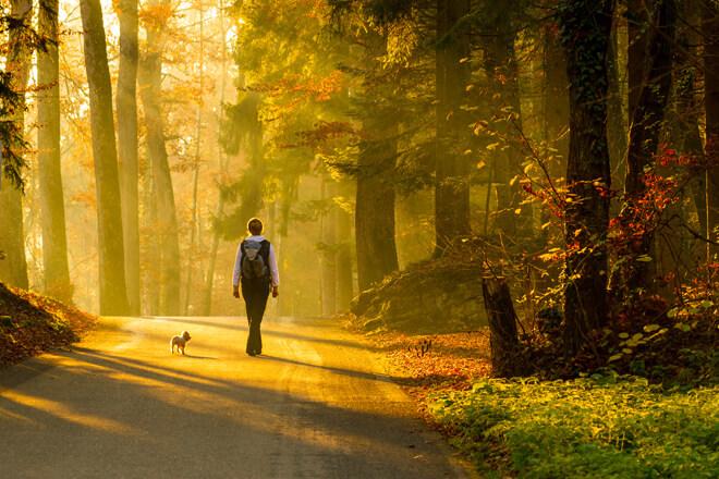passeggiata con il cane nel bosco