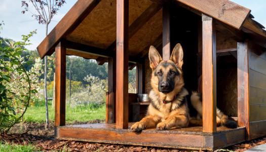 5 consigli per lasciare con tranquillità il vostro amico in una pensione per cani