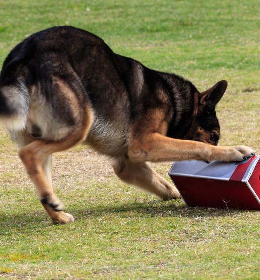 Problem Solving: giochi per cani
