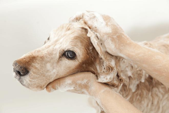 toelettatura-cane-lavaggio