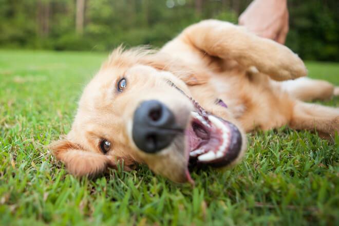 cane marca con l'odore del corpo