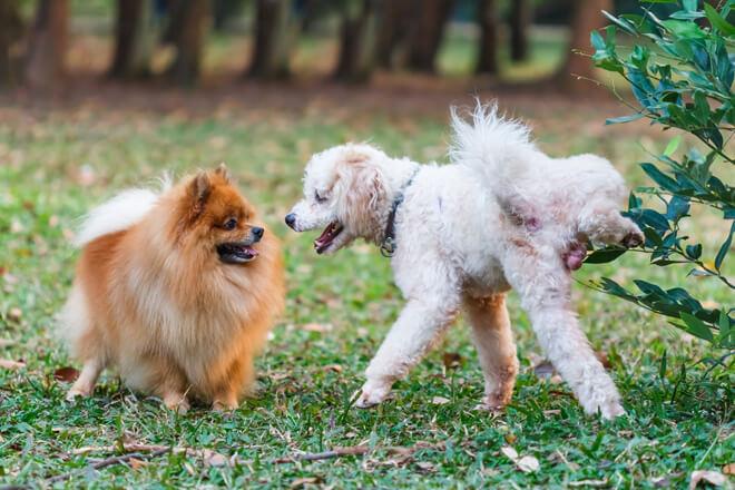 cane marca il terriorio