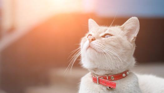 Non è il gatto il più intelligente… il più intelligente non esiste.
