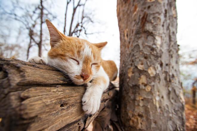 gatto abitudinario