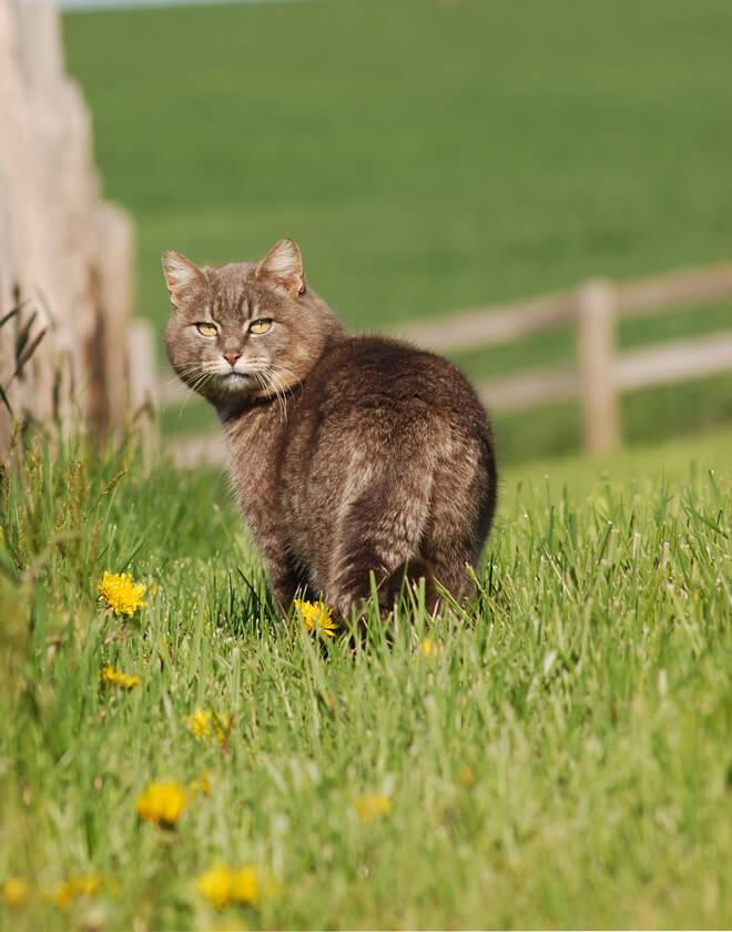 comportamento dei gatti perché non rientra a casa