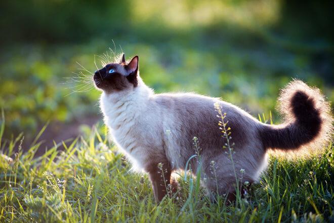 gatto esploratore