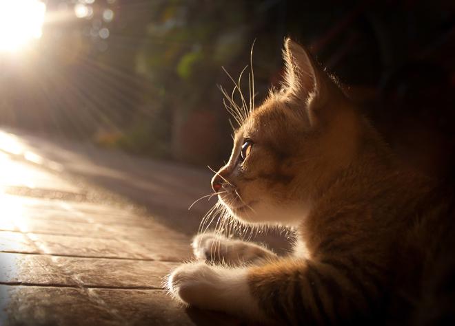 gatto che ragiona e riflette