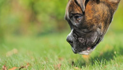 Giochi per cani: la ricerca