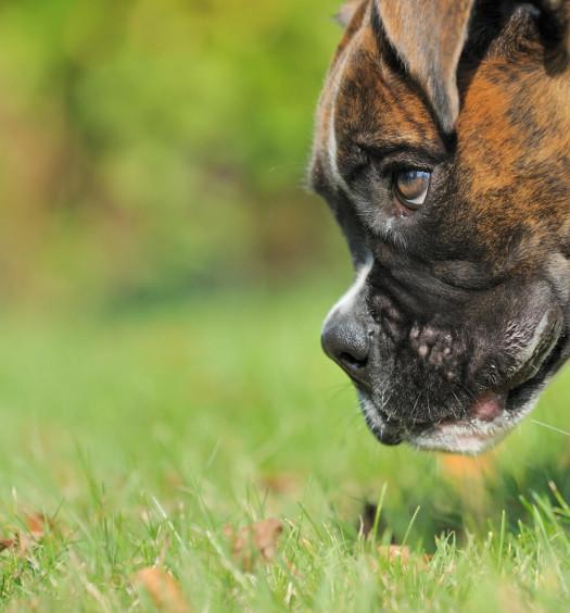 la ricerca giochi per cani