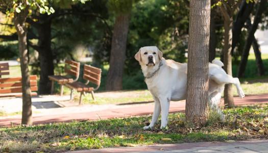 Comunicazione del cane: l'importanza delle marcature