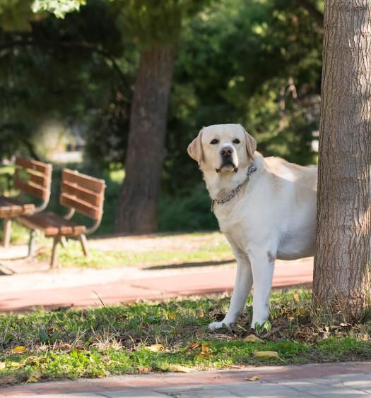 marcature del cane