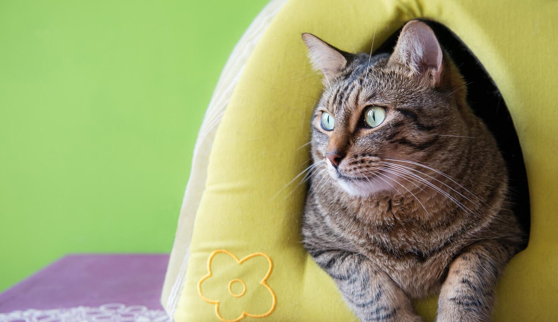 pensione per gatti 5 consigli