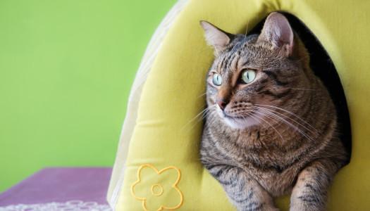 5 consigli per scegliere una pensione per gatti