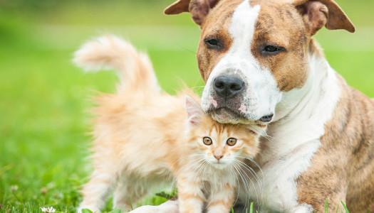 La relazione tra cane e gatto: solo rose e fiori?