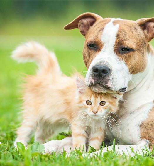 relazione cane gatto