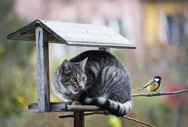 alimentazione gatto caccia uccelli