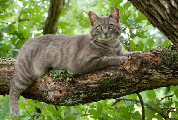 colori del mantello del gatto