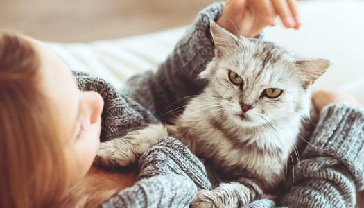Domesticazione: come è nata la relazione uomo-gatto?