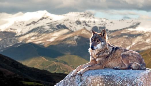 Domesticazione: la relazione uomo e cane attraverso i millenni