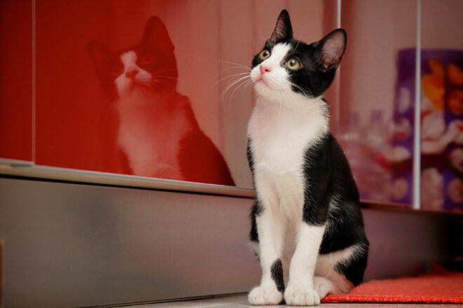 domesticazione del gatto