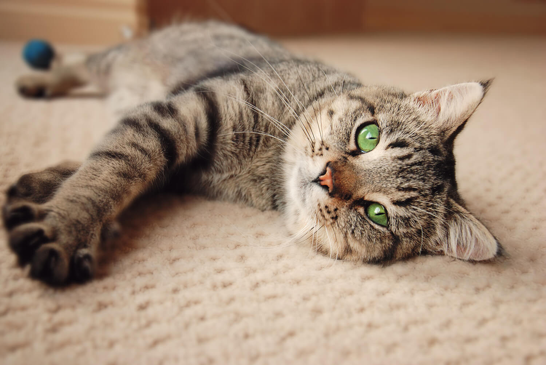 gatto sociale solitario