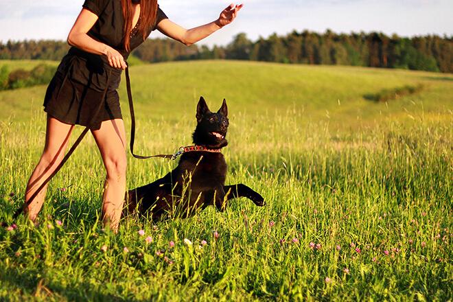 imparare ad insegnare al cane