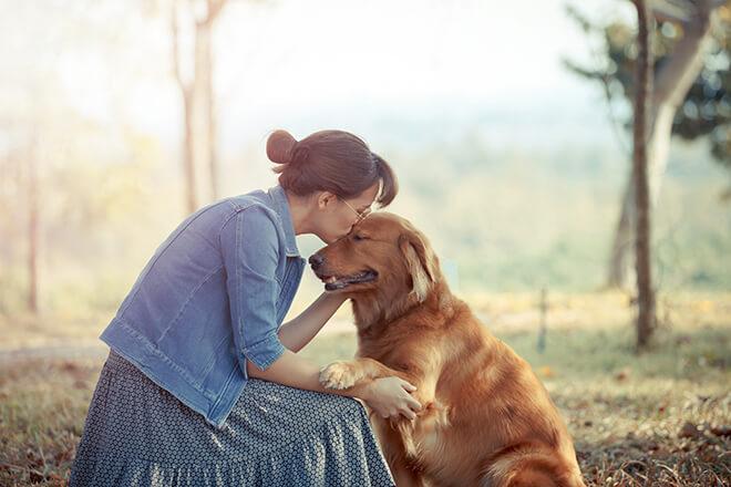 premiare il cane con il bravo