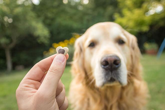premiare il cane con il cibo