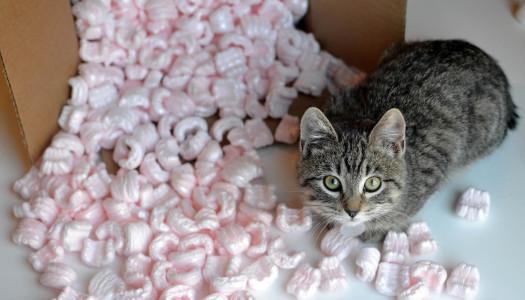 Gatto in casa: 7 regole per un trasloco senza stress
