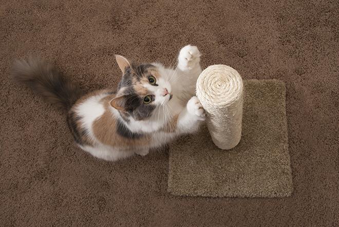 trasloco gatto tiragraffi