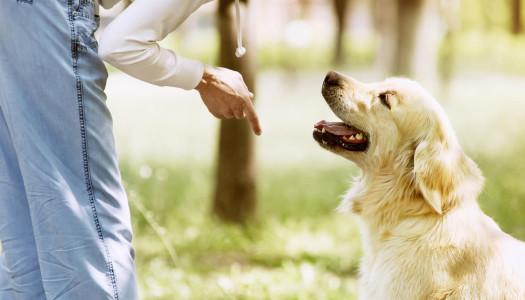 Il veterinario comportamentalista