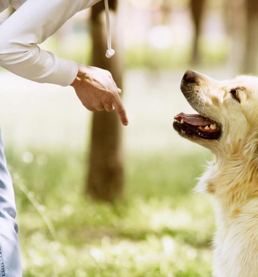 veterinario comportamentalista