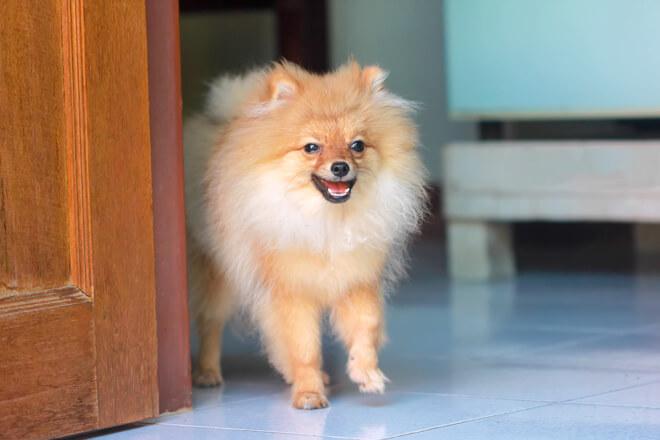 comportamnetalista per cane in casa