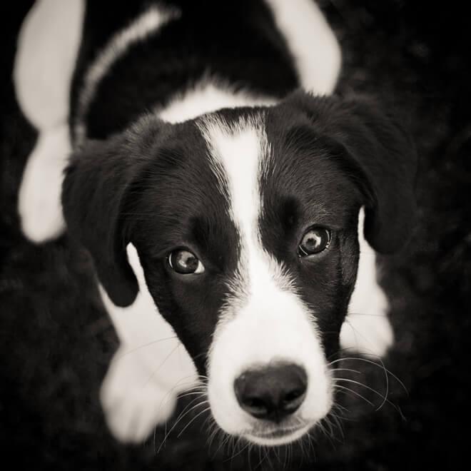 vista cane