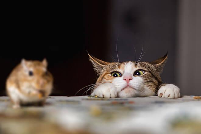 comportamento dei gatti gatto e preda
