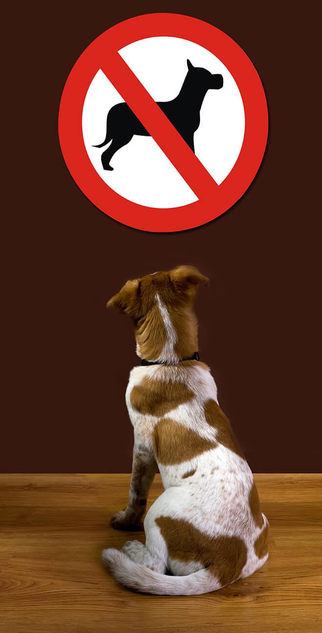 divieti per i cani