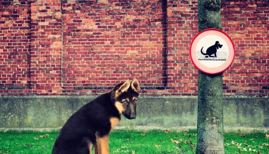 Leggi sui cani: favoriscono l'integrazione… oppure no?
