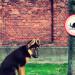 leggi cani