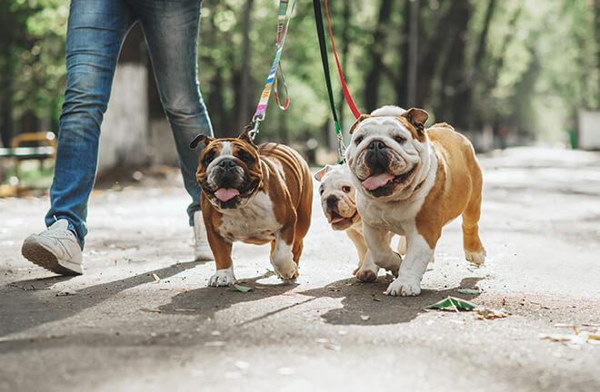 leggi guinzaglio e luoghi pubblici per i cani